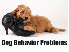 Dog Behavior Problems